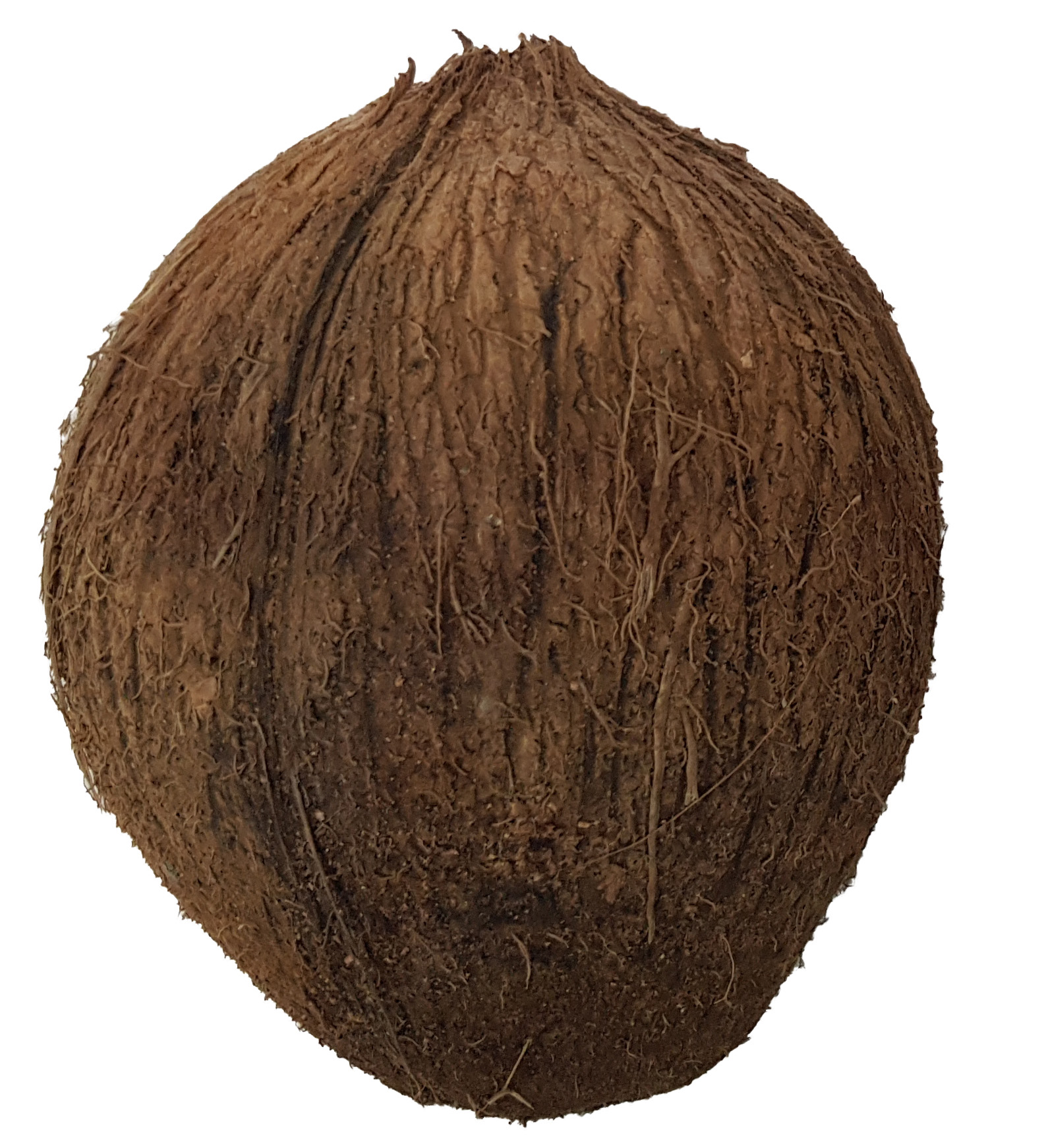 Whole Coconut